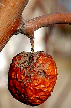 Como frutas antes de ser tomada por mi querida - 1 9